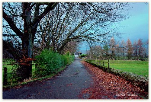 イギリスの冬