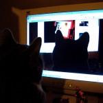 【英語学習】Skype英会話レアジョブを始めて2ヶ月が経ちました。