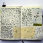 【英語学習】レアジョブの使い方色々。YOU、たまには英語で日記書いてみなよ。